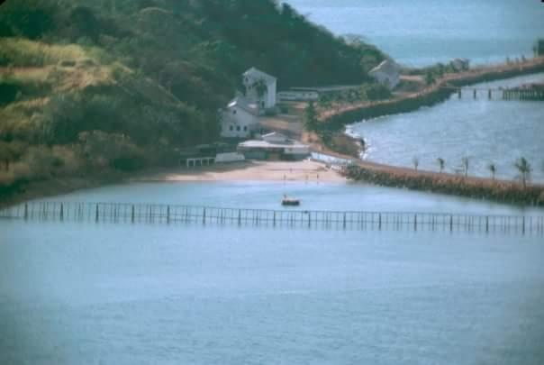 malla tiburones playa causeway