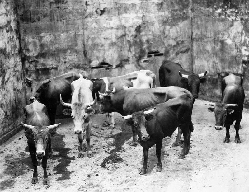 plaza toros vista alegre (5)